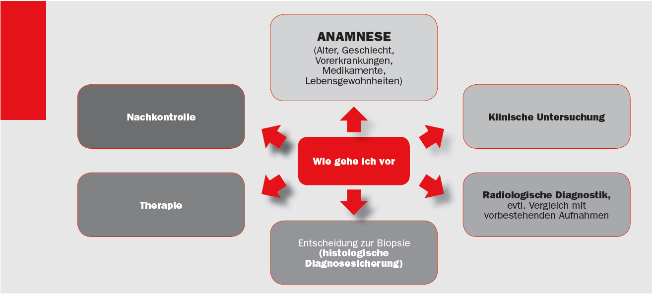 Charmant Dargestellten Zahn Embryologie Histologie Und Anatomie ...